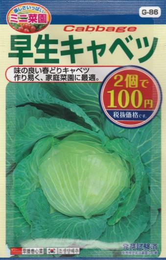 100均の種 『早生キャベツ(富士早生)』