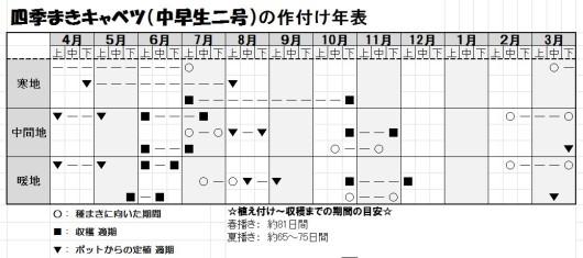 四季まきキャベツ(中早生二号)作付け表