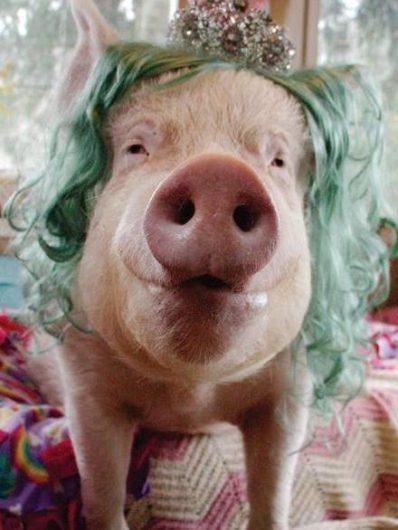 Pig Insider